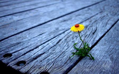 Lonely, but strong♥ - Flowers Wallpaper ID 1211285 - Desktop Nexus Nature