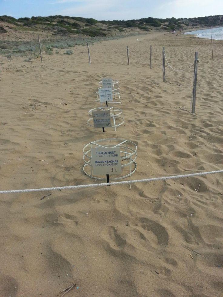 Cyprus -  Lara Bay Beach - Turtle Nests