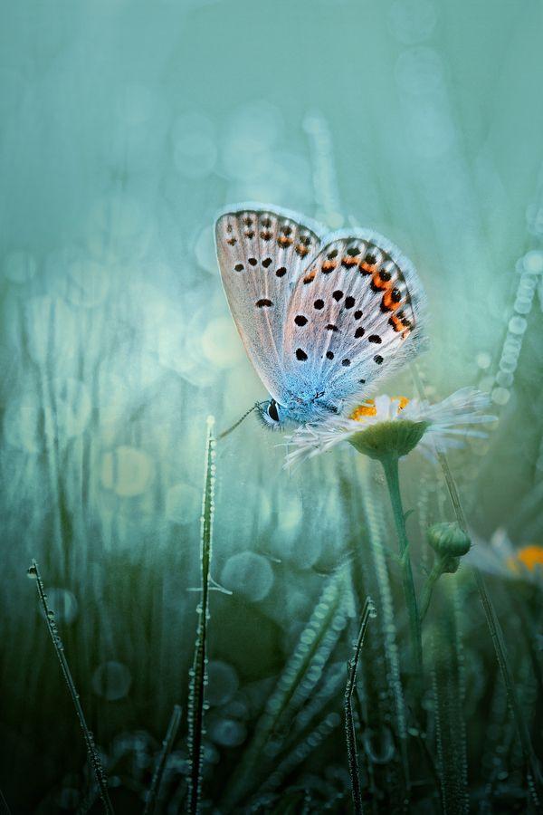 Delicate Little Butterfly