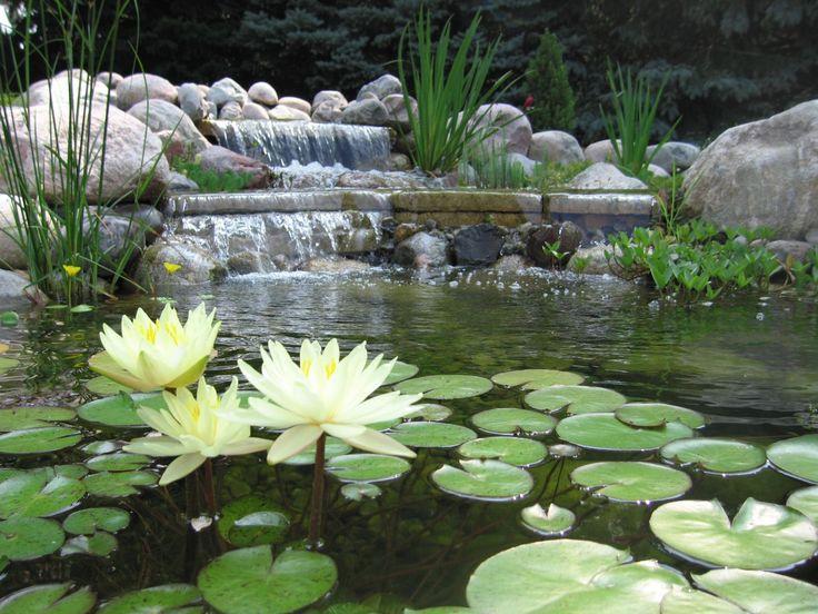 estanques de jardn jardines acuticos construccin de estanques de jardn para peces