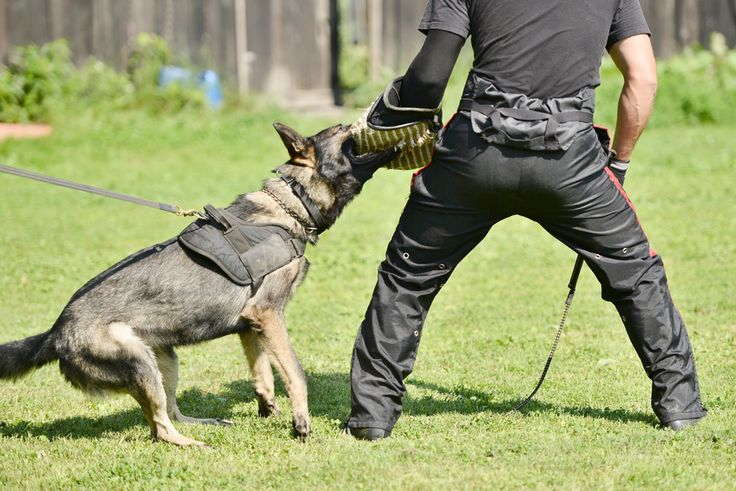 Métiers animaliers : Le maître chien