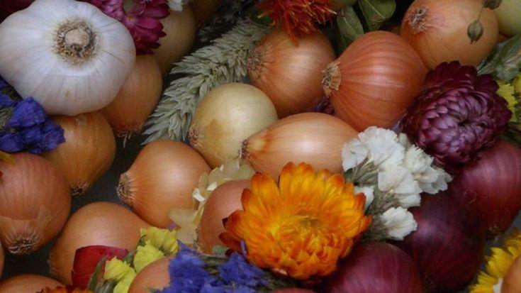 Die Zwiebel: Gesundes Hausmittel