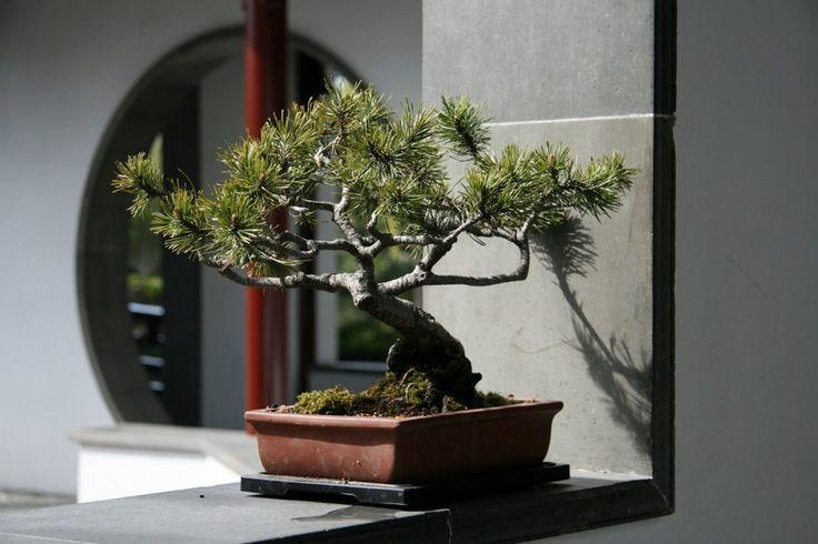 Как грамотно использовать деревца бонсай в интерьере квартиры или загородного дома http://archiq.ru/kak-gramotno-ispolzovat-derevtsa-bonsaj-v-interere-kvartiry-ili-zagorodnogo-doma/