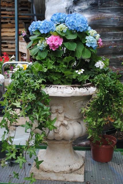 Decorative Urns For Plants 206 Best Garden Pots & Urns Images On Pinterest  Garden Urns