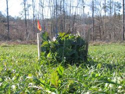 An Exclusion Cage in Wildlife Food Plots How to plant Food Plots for Wildlife. Wildlifeseeds.com an info site by Seedland.com