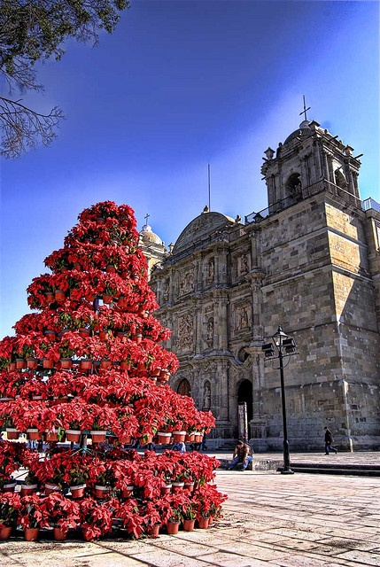 "PICTURE OF ""LA CATEDRAL DE OAXACA"" WITH ITS CHRISTMAS TREE MADE OUT OF ""NOCHE BUENAS"". - by Rene Ortega"
