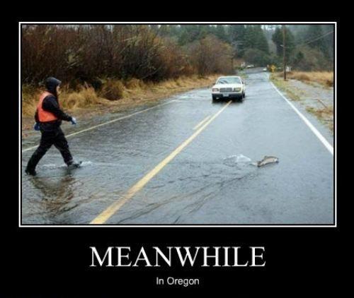 Why did the Salmon cross the road?Like A Boss, The Roads, Funny Pics, Walks, Fish, Funny Stuff, Humor, North Carolina, Likeaboss