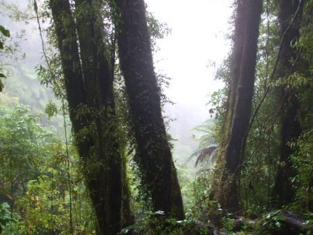 Mount Ngongotaha walks at Rotorua, NZ - A view through the mist. This is the home of the fairy people (Patu -Paiarehe in māori).