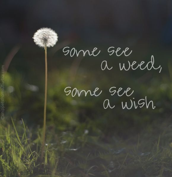 Some see a weed, some see a wish