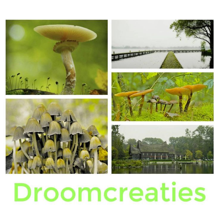 Autumn pictures from Holland  #autumn #autumncolors #herfst #fungus #mushrooms #paddenstoel #paddenstoelen #kralingseplas #kralingsebos #holland #droomcreaties #picoftheday #pictures #herfstfotografie #herfstfoto
