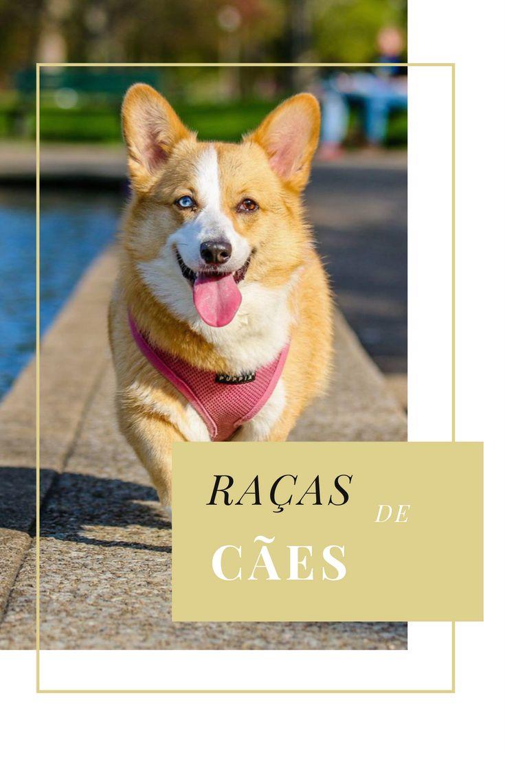 Lista de várias raças de cães do mundo inteiro.