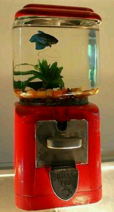 *Vintage early 60's Gumball Machine, revamped into a Beta Fish Bowl ~ *back-in-the-day when you got 2gumballs = 1 penny...