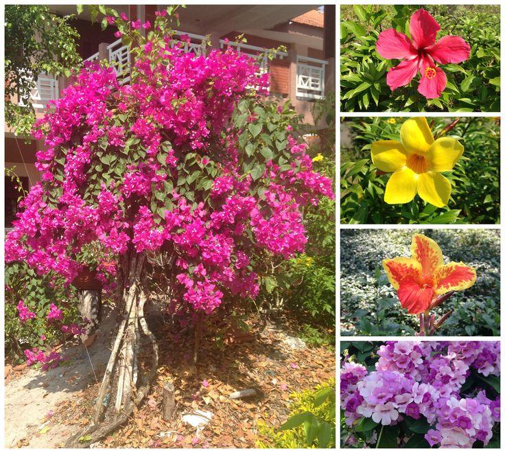 Vietnamese flowers