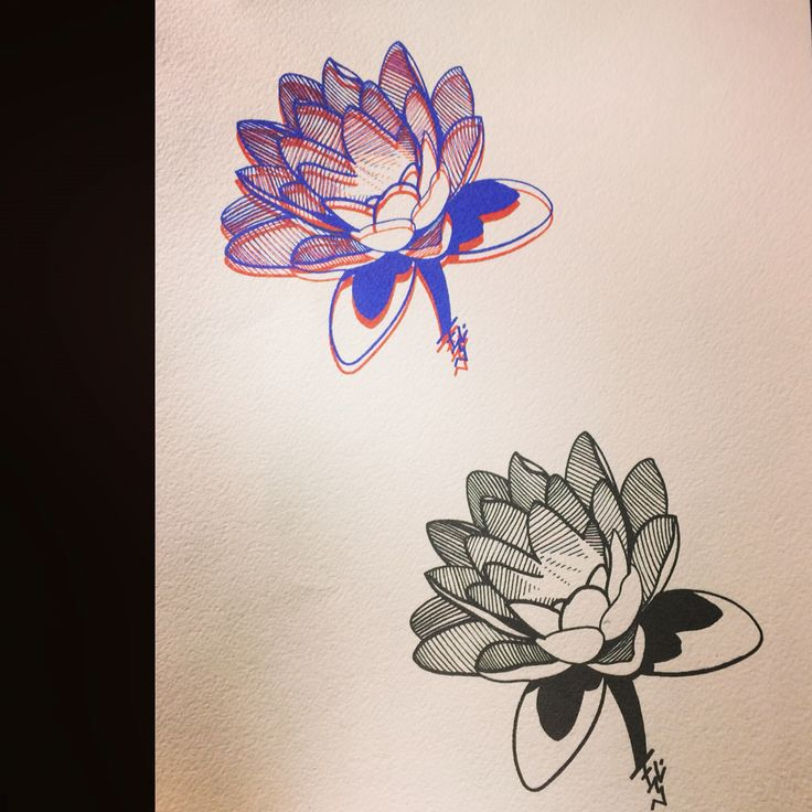 Lotus wrong