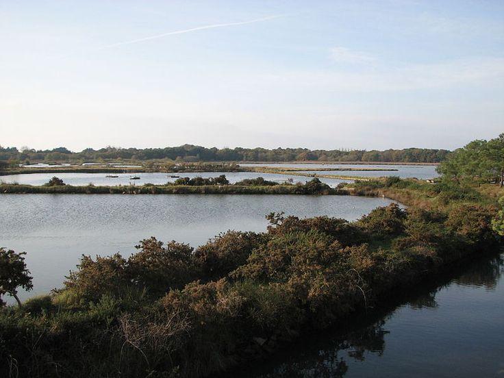 Marais de Pen en toul, à Larmor-Baden (Morbihan) (photo de Stéphane Batigne, Wikimedia)