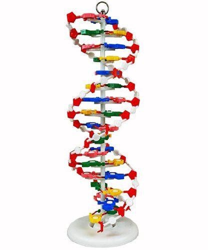 13 Best DNA Model Ideas Images On Pinterest