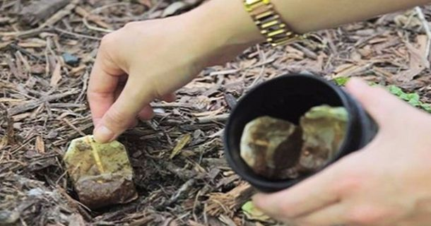 There's actually quite a few things you can do with used tea bags, especially in the garden. Keep reading to learn why you might want to bury those teabags instead of tossing them in the trash...