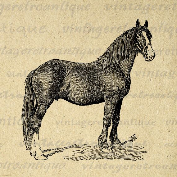 Printable Digital Shire Colt Horse Graphic Animal Image