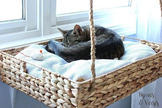 18 DIY Cat Shelves Ideen für ultimative Katzenliebhaber   – Floki