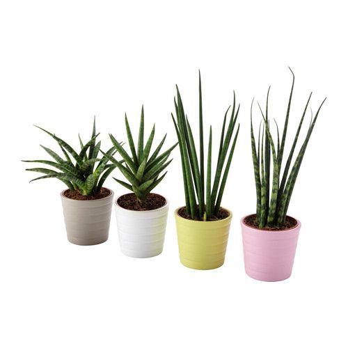 1000 id es sur le th me sansevieria plant sur pinterest for Ikea plantes d interieur