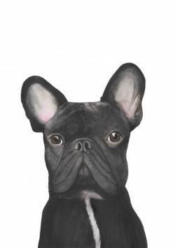 Gibert the French Bulldog Giclee Print
