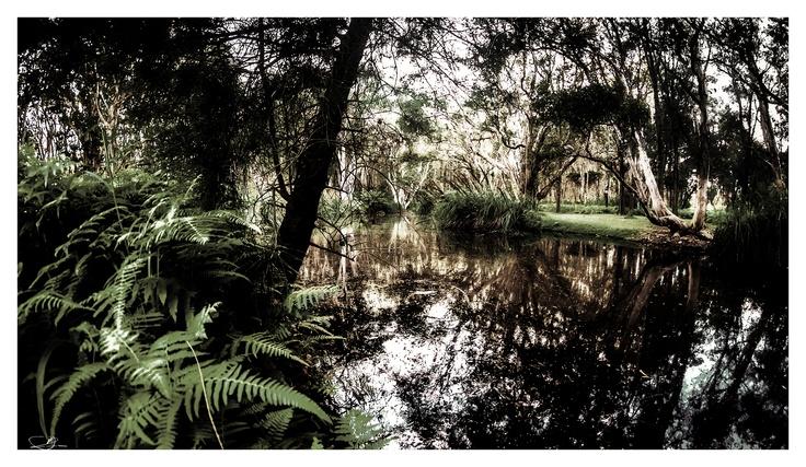 Centennial Wetlands by mdomaradzki.deviantart.com on @deviantART