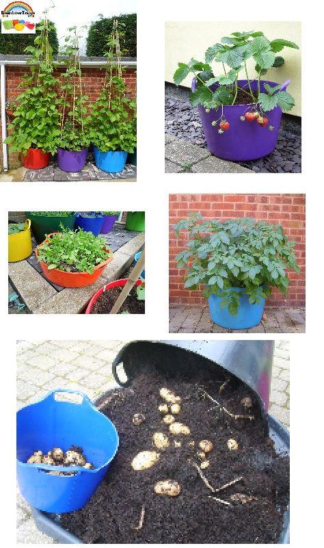 Grow Your Own the Rainbow Way!  www.rainbowtrugs.com