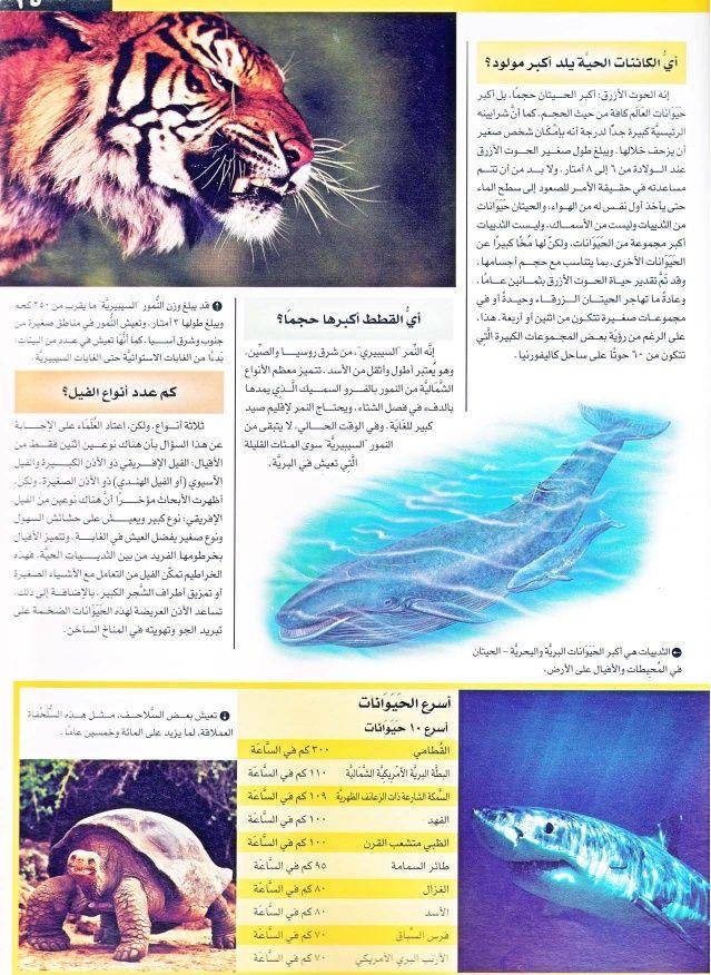 موسوعة سؤال وجواب عجائب الدنيا Arabic Books Art