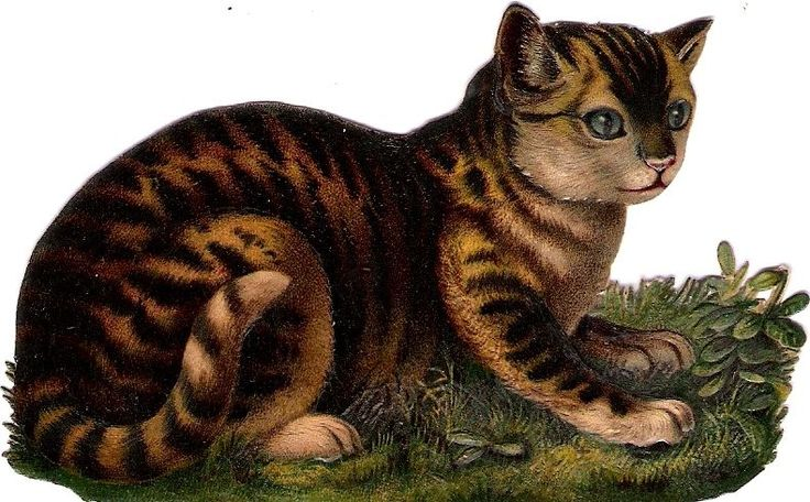 Oblaten Glanzbild scrap die cut chromo Katze tiger cat kitten chat chaton:
