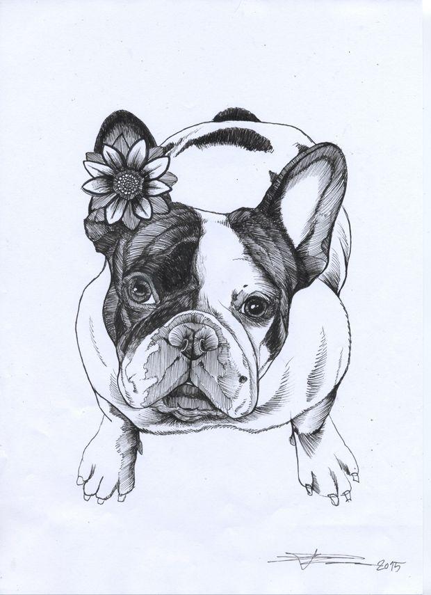 frenchie , french bulldog , cute