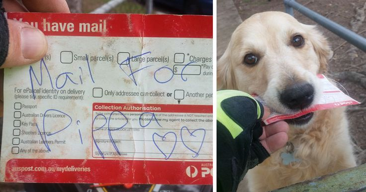 Dog Loves Getting Mail So Much That Postman Writes Her Letters Even When There's No Mail | Bored Panda