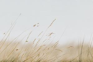 EMILY OBRIEN | https://emilyobrienlifestyle.com    Sea Grass Photographic Print