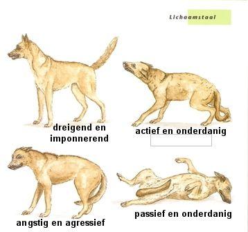 Voorbeelden van honden gedrag