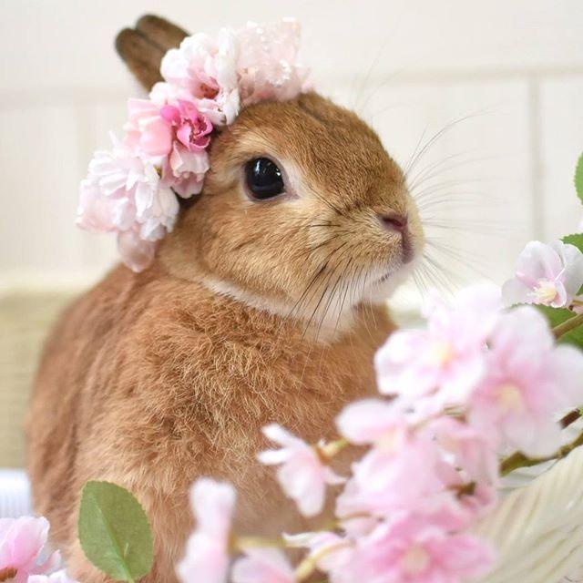 Pinterest 2020 かわいい動物の赤ちゃん かわいいウサギ うさぎ
