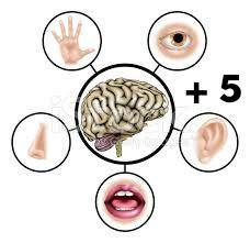AUTISMO E O PROCESSAMENTO SENSORIAL - Os cinco sentidos a mais