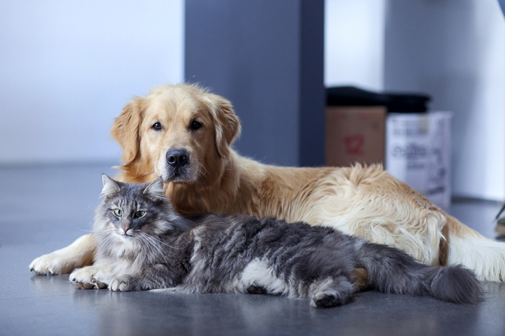 BREAD & BALTHUS :: #dog #cat #friends