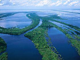 Güney Amerika'nın en uzun nehri olan Amazon Nehri ve kollarında 30 piranha türü yaşar. 6.437 km'lik uzunluğuna sahip tek bir akarsuda 30 farklı türün yaşaması Yüce Allah'ın tek bir nehir üzerinde yarattığı çeşitlilik sanatına örnek oluşturur.
