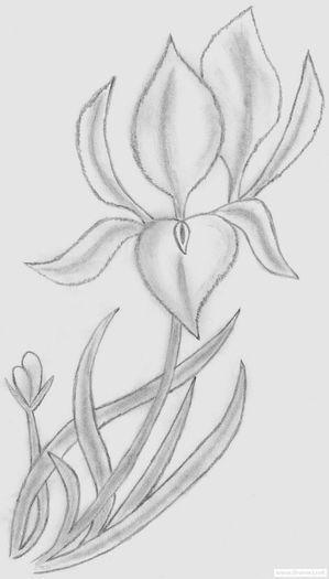 desen-creion-1283630124 - Desene in creion cu flori