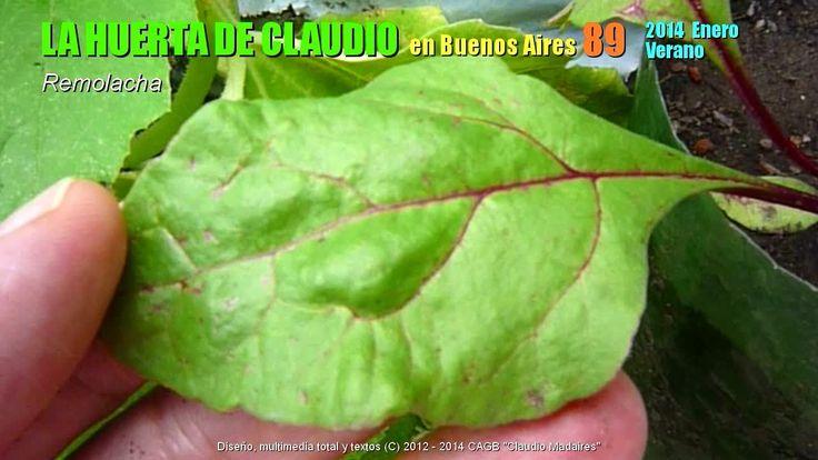 Cultivo de la remolacha orgánica en botellas y bolsas 2/2