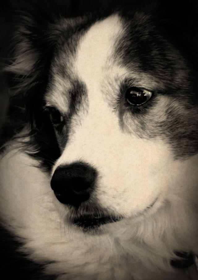 Gorgeous dog and photo:)