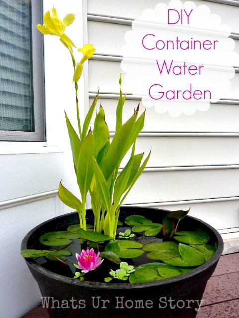 How to make a container water garden for your deck or patio. Use mosquito dunk and even fish to keep the mosquitos out and it WORKS!