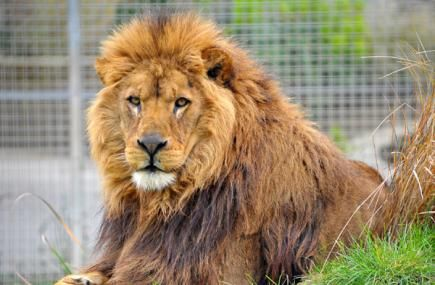 Things to do in Cornwall | Newquay Zoo | Cornwall