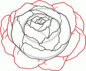 How to Draw a Peony, Peony Flower, Step by Step, Flowers, Pop Culture, FREE Online Drawing Tutorial, Added by Dawn, February 14, 2013, 1:15:48 pm