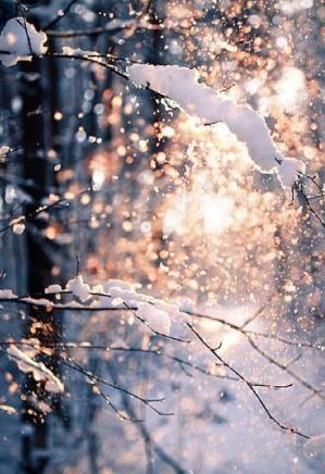 winter wonderland by Eva0707