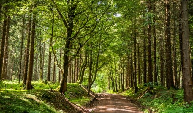 Der Rennsteig im Thüringer Wald   Ferienhaus Lichtung
