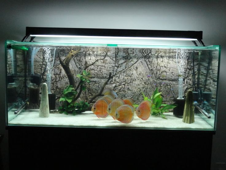 Pretty fishtank white sand discus aquarium for Freshwater fish tank setup
