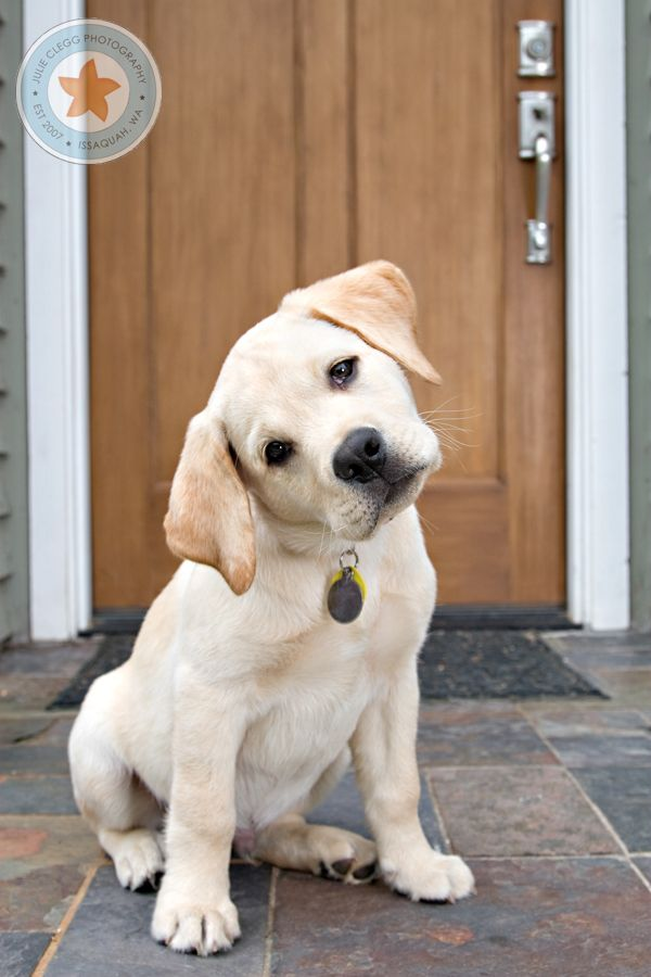Capturing a Dog's Personality; 7 tips ----    GREAT ideas on this website & some really cute puppies :)
