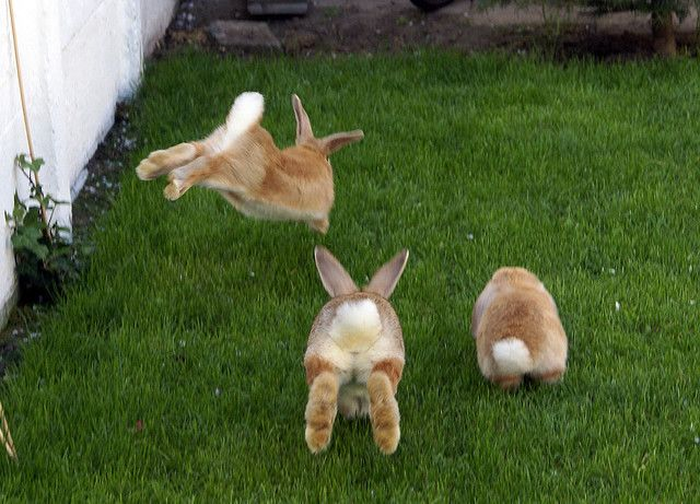 Off to the garden we go! We need the carrots!!!!!!!!!!!!
