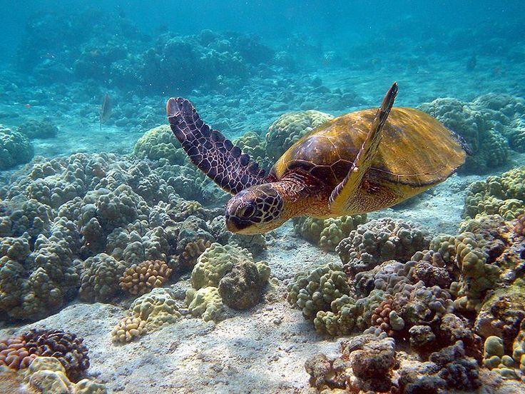 Mayotte Sehenswürdigkeiten im Komoren Reiseführer http://www.abenteurer.net/2103-komoren-reisefuehrer/