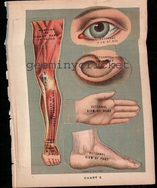 8 best medical charts images on Pinterest 1920s, Charts and Dolls - medical charts